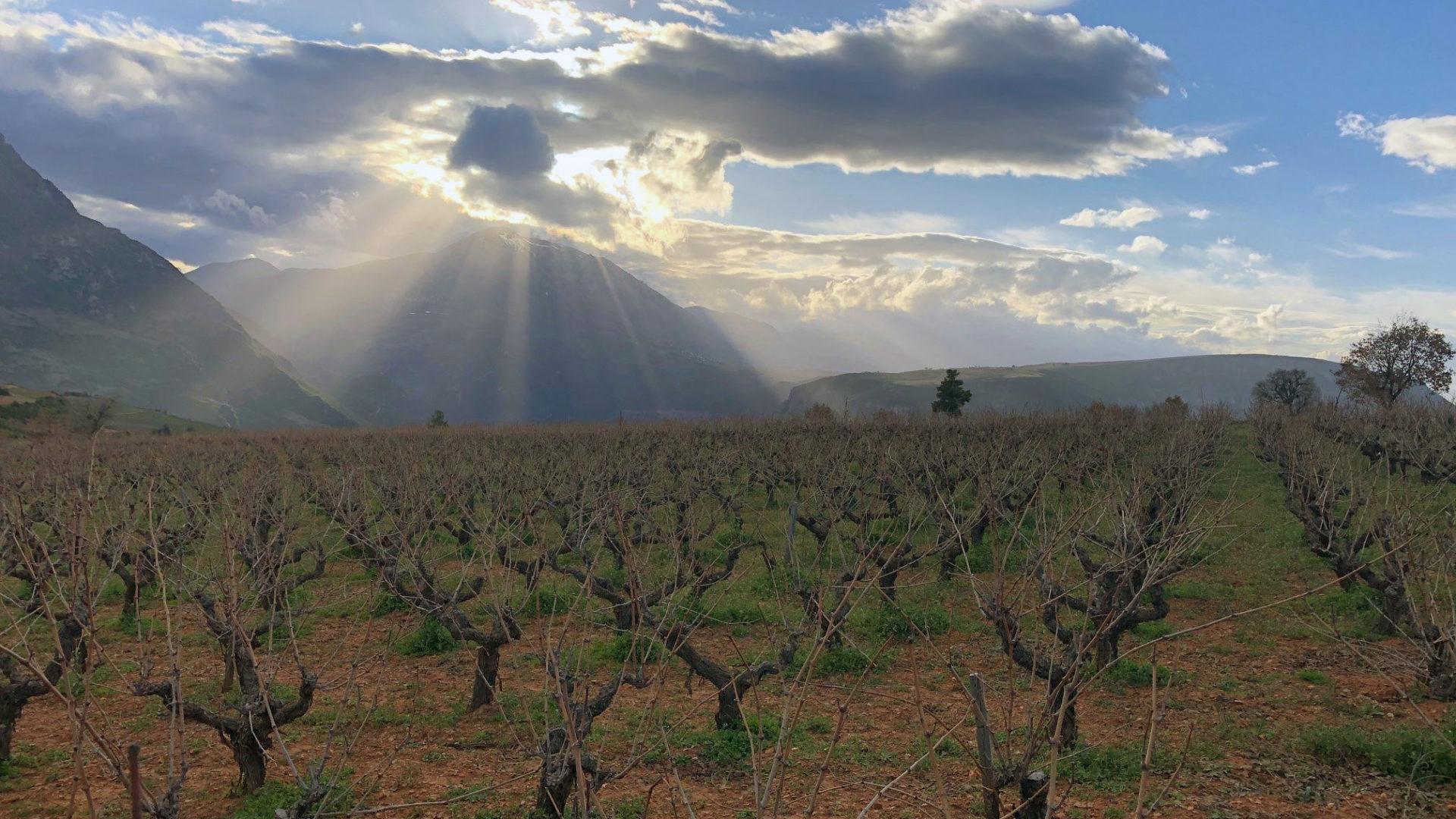 Oenos,  La Qualité de la Vigne au Vin